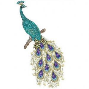 peacock001