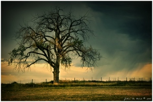 The_Tree_Of_Life_by_kkart copy